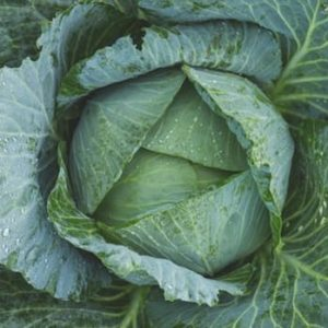 picture of fresh cabbage head kitchen spirit recipes jill reid healthy food recipes