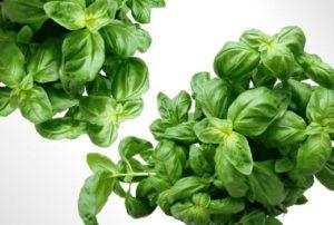 organic basil jill reid kitchen spirit