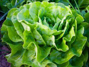 lettuce jill reid kitchen spirit