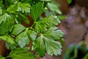 organic parsley jill reid kitchen spirit