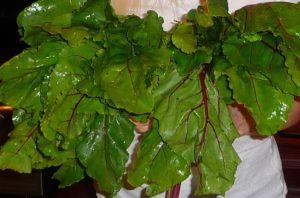 beet greens jill reid kitchen spirit